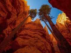priroda, pine, more