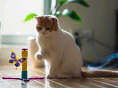 кот, играет, бабочкой