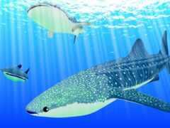 акула, море, blue