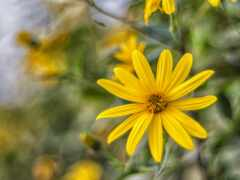 цветы, природа, yellow