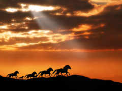 лошадь, лошади, закат