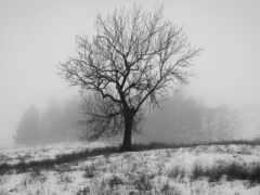 снег, дерево, cover