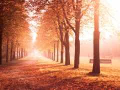 природа, осень, аллея