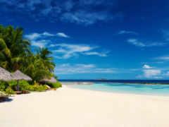 океан, пальмы, пляж