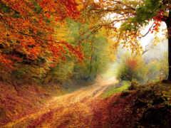 chromebook, природа, осень