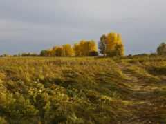 осень, горизонт, природа