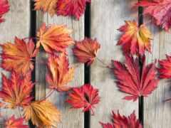 leaf, wood, палуба