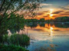 marsh, freshwater, wikipediafreshwater