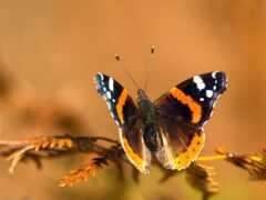 бабочка, funart, makryi