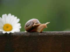 snail, улитки, цветы