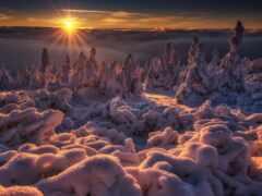 winter, puzzle, příroda