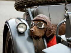 собака, point, мотоцикл