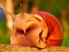 snail, helix, природа