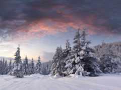 снег, winter, лес