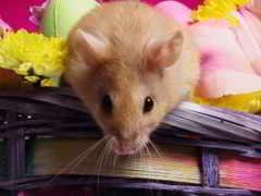 mouse, мышей, eng