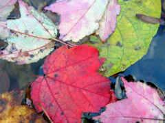 fondos, pantalla, otoño