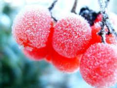 ягоды, замороженные, зимние