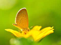 бабочка, цветы, насекомое