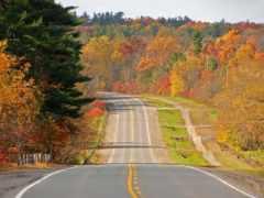 дорога, осень, деревне
