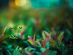 цветы, oir, растение