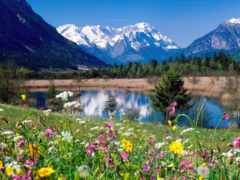 луга, альпийские, фотографий