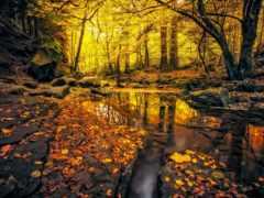 german, осень, лес