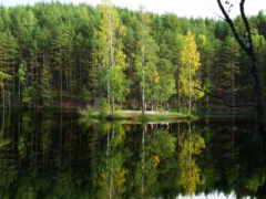 лес, природа, леса