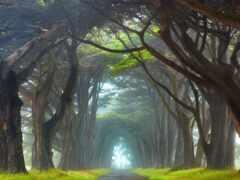 дерево, perspective, stanis