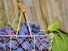 слива, ферма, плод