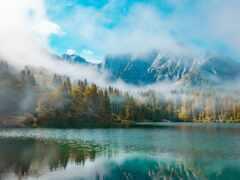 лес, фотообои, туман