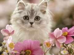 день, кот, postcard
