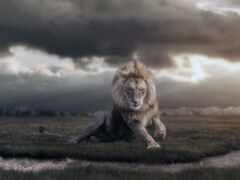 left, lion, природа