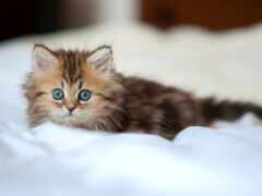 пушистый, котенок, sweetheart