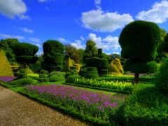 garden, fond, весна