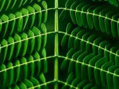 лист, растение, зелёный