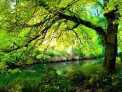река, дерево, лес