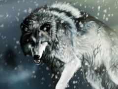 волк, снег, волки