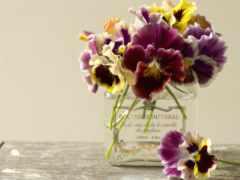 cvety, глазки, весна
