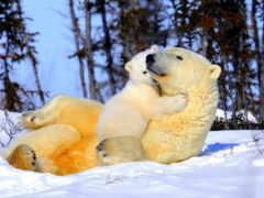 природа, winter, красивые