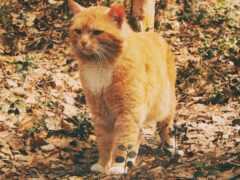 кот, stoloboi, осень