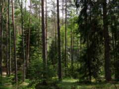 площадь, леса, минская