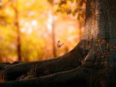 осень, природа, рисунки