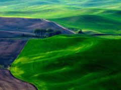 margin, зеленые, панорама