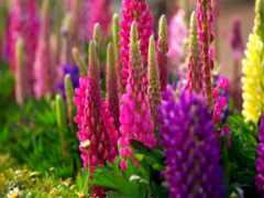 растение, красивое, растения