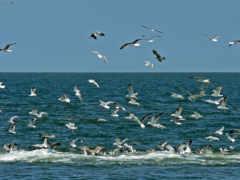 ecosia, над, морем