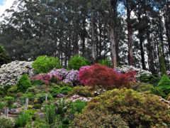 red, цветы, garden