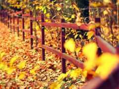 дерево, забор, посадка