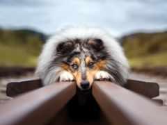 собака, уже, лучшая