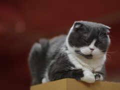 кот, gato, cinza
