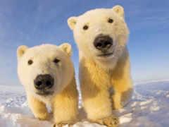 медвежата, которые, очаровательные